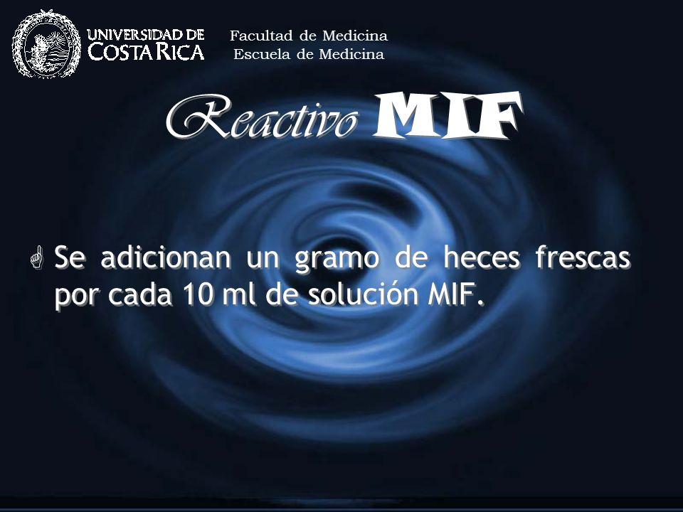 Reactivo MIF G Se adicionan un gramo de heces frescas por cada 10 ml de solución MIF. Facultad de Medicina Escuela de Medicina