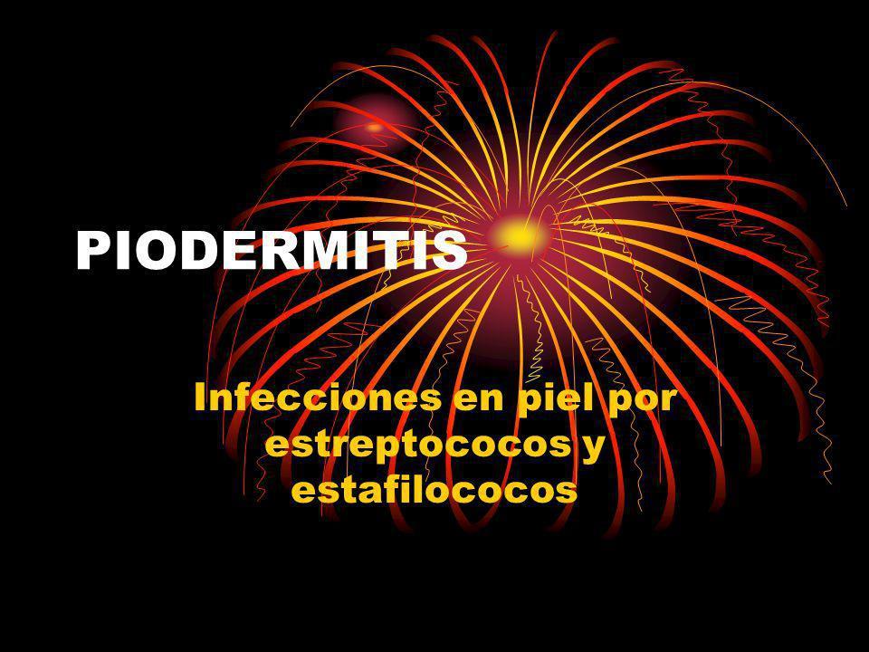 PIODERMITIS Infecciones en piel por estreptococos y estafilococos