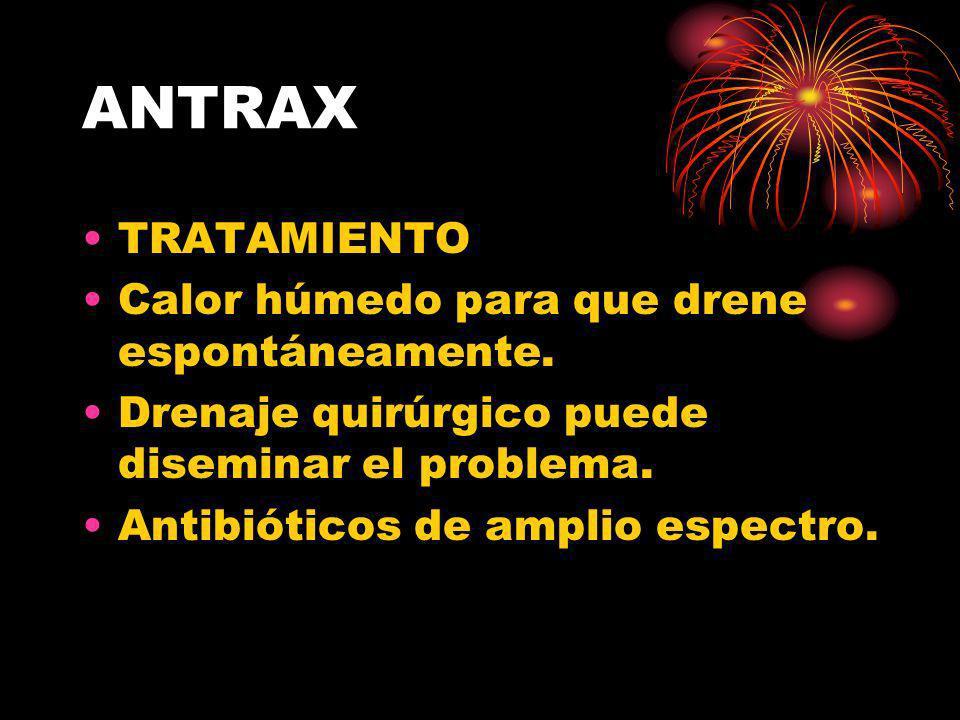 ANTRAX TRATAMIENTO Calor húmedo para que drene espontáneamente. Drenaje quirúrgico puede diseminar el problema. Antibióticos de amplio espectro.
