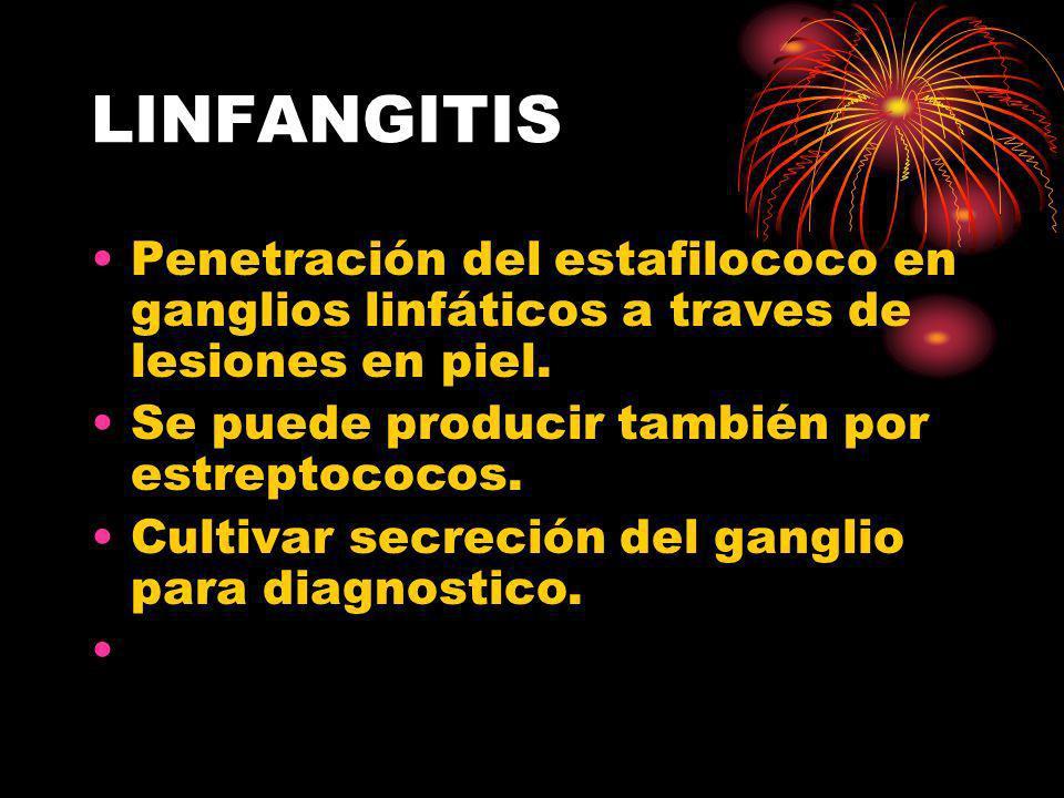 LINFANGITIS Penetración del estafilococo en ganglios linfáticos a traves de lesiones en piel. Se puede producir también por estreptococos. Cultivar se