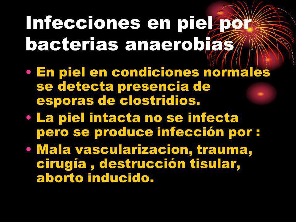 Infecciones en piel por bacterias anaerobias En piel en condiciones normales se detecta presencia de esporas de clostridios. La piel intacta no se inf