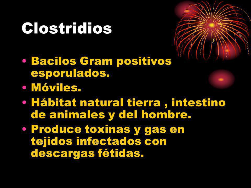 Clostridios Bacilos Gram positivos esporulados. Móviles. Hábitat natural tierra, intestino de animales y del hombre. Produce toxinas y gas en tejidos