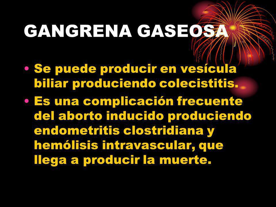 GANGRENA GASEOSA Se puede producir en vesícula biliar produciendo colecistitis. Es una complicación frecuente del aborto inducido produciendo endometr