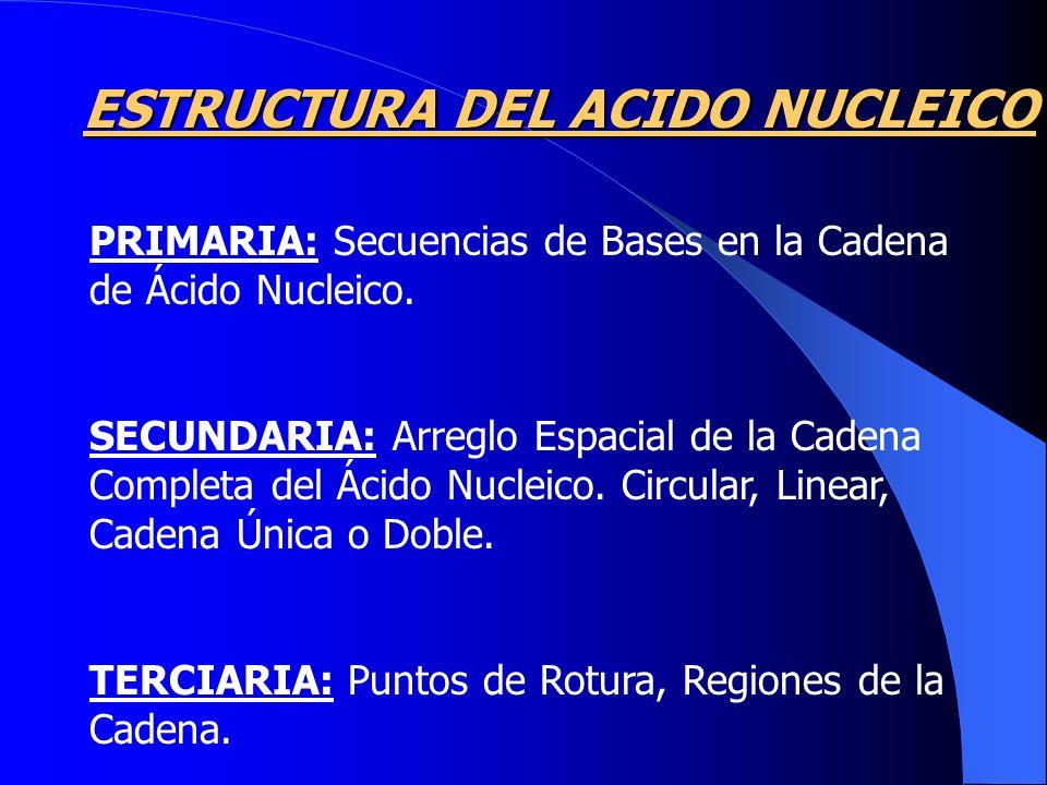 PRIMARIA: Secuencias de Bases en la Cadena de Ácido Nucleico. SECUNDARIA: Arreglo Espacial de la Cadena Completa del Ácido Nucleico. Circular, Linear,