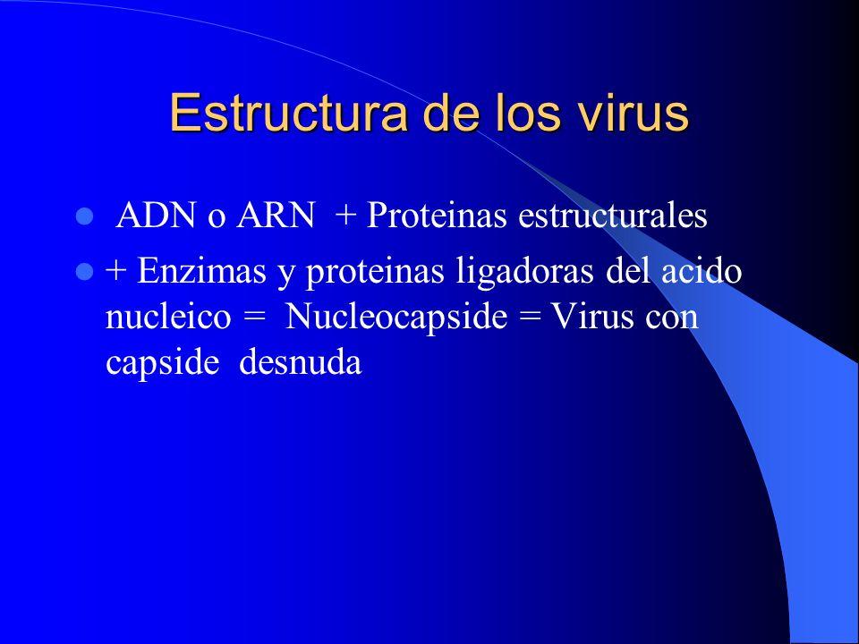 Estructura de los virus ADN o ARN + Proteinas estructurales + Enzimas y proteinas ligadoras del acido nucleico = Nucleocapside = Virus con capside des