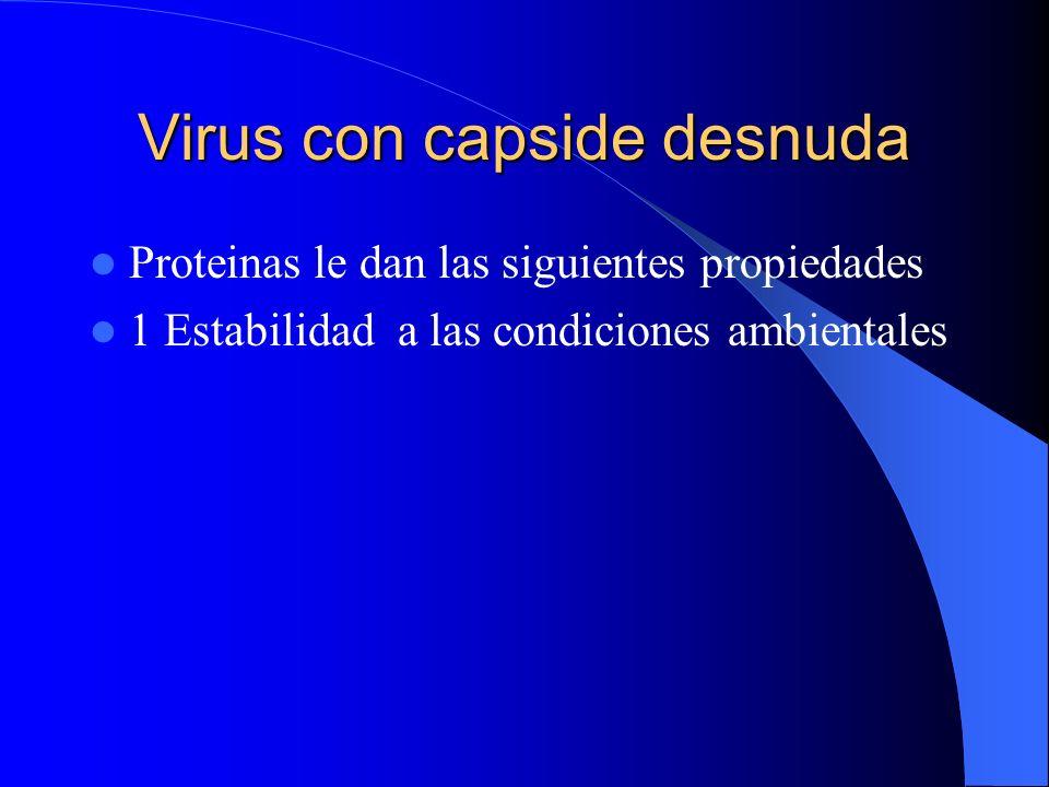 Virus con capside desnuda Proteinas le dan las siguientes propiedades 1 Estabilidad a las condiciones ambientales