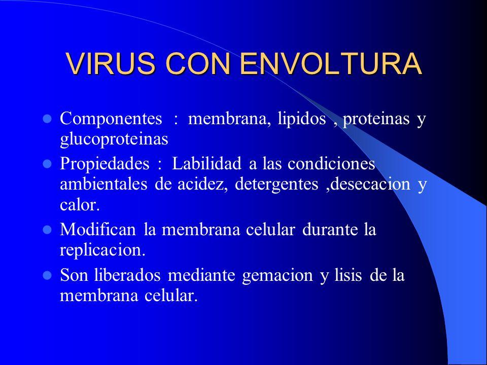 VIRUS CON ENVOLTURA Componentes : membrana, lipidos, proteinas y glucoproteinas Propiedades : Labilidad a las condiciones ambientales de acidez, deter