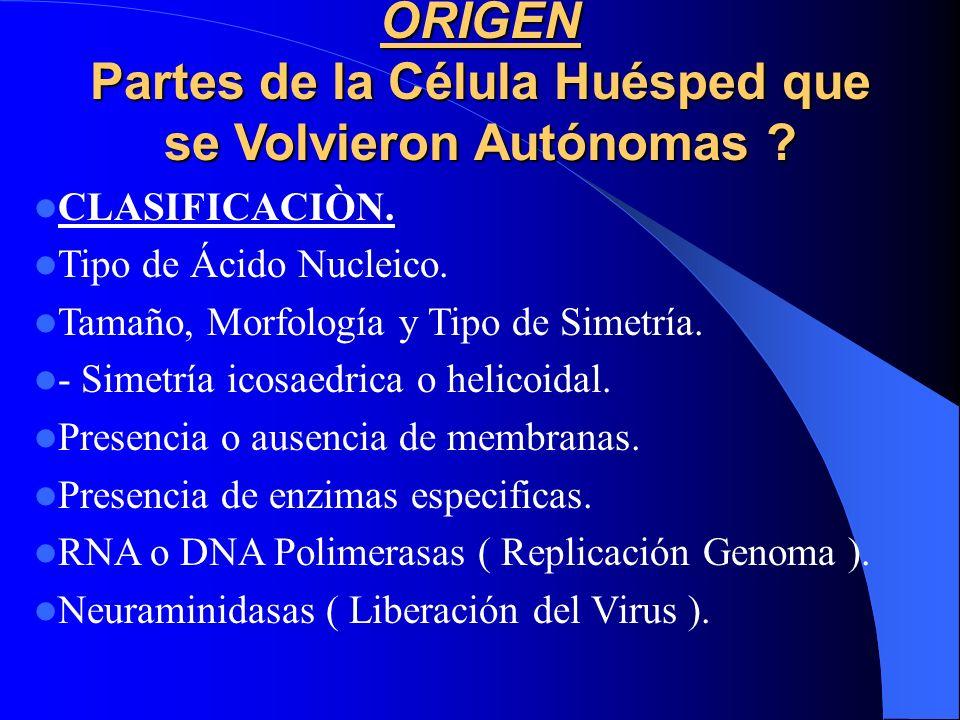 ORIGEN Partes de la Célula Huésped que se Volvieron Autónomas ? CLASIFICACIÒN. Tipo de Ácido Nucleico. Tamaño, Morfología y Tipo de Simetría. - Simetr