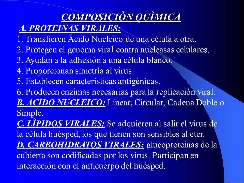 COMPOSICIÒN QUÌMICA A. PROTEINAS VIRALES: 1. Transfieren Ácido Nucleico de una célula a otra. 2. Protegen el genoma viral contra nucleasas celulares.