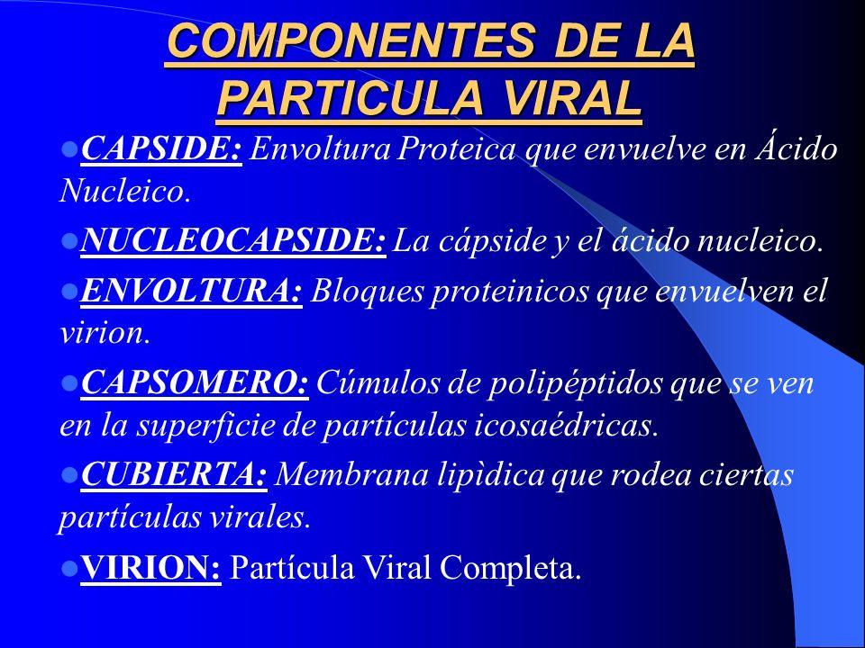 COMPONENTES DE LA PARTICULA VIRAL CAPSIDE: Envoltura Proteica que envuelve en Ácido Nucleico. NUCLEOCAPSIDE: La cápside y el ácido nucleico. ENVOLTURA