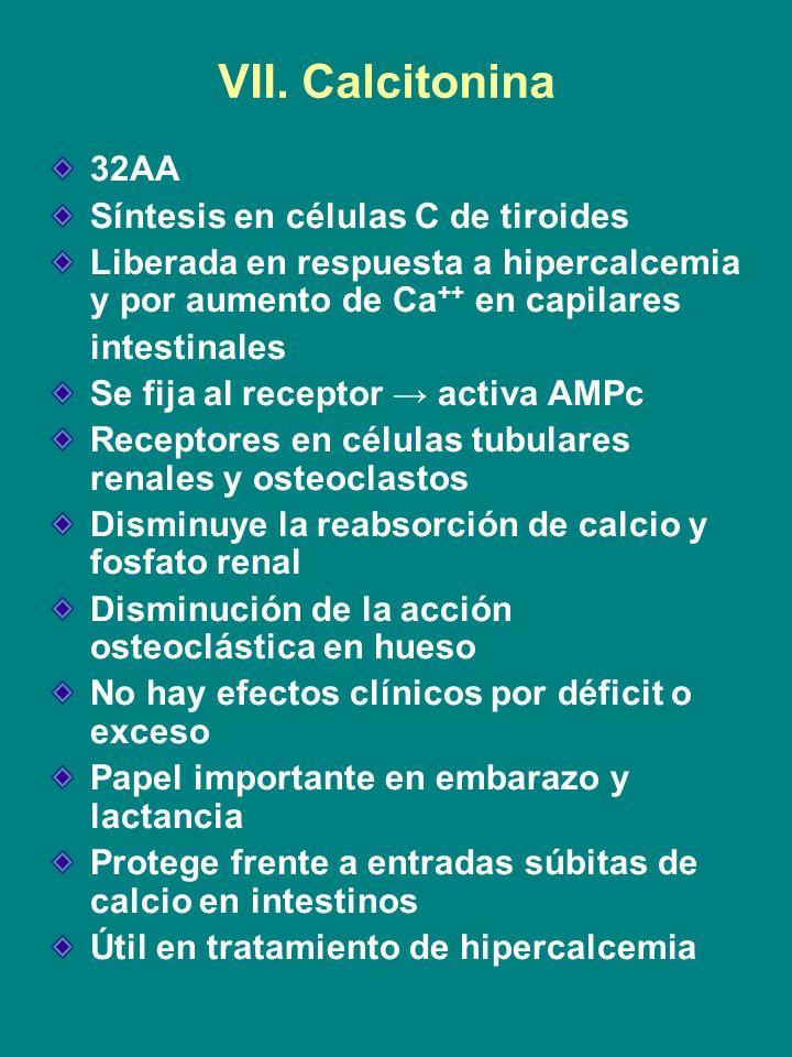 VII. Calcitonina 32AA Síntesis en células C de tiroides Liberada en respuesta a hipercalcemia y por aumento de Ca ++ en capilares intestinales Se fija