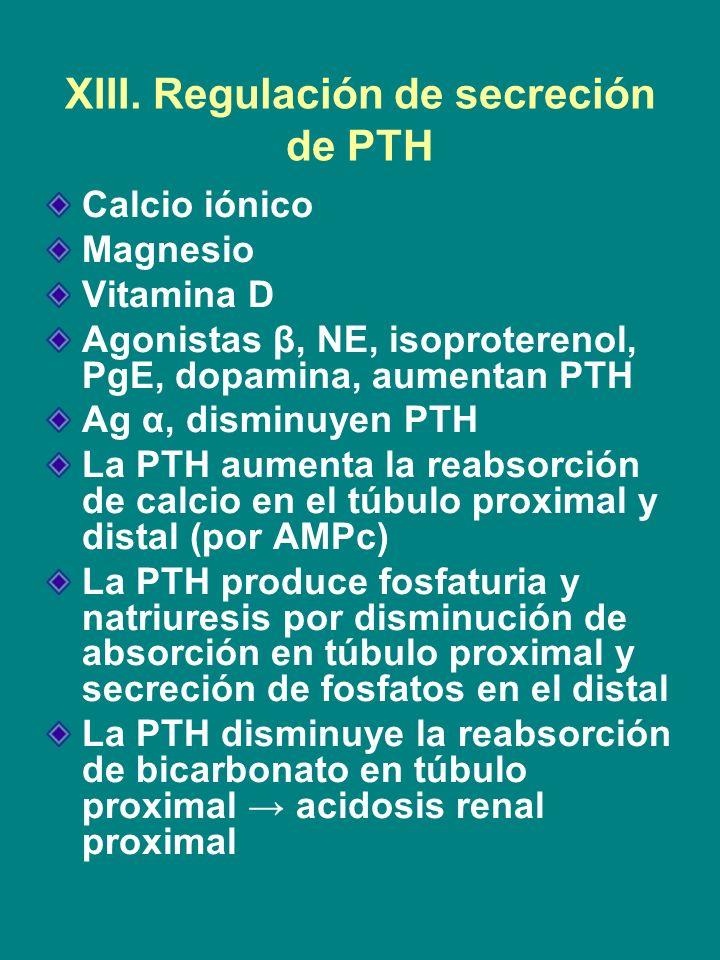 XIII. Regulación de secreción de PTH Calcio iónico Magnesio Vitamina D Agonistas β, NE, isoproterenol, PgE, dopamina, aumentan PTH Ag α, disminuyen PT