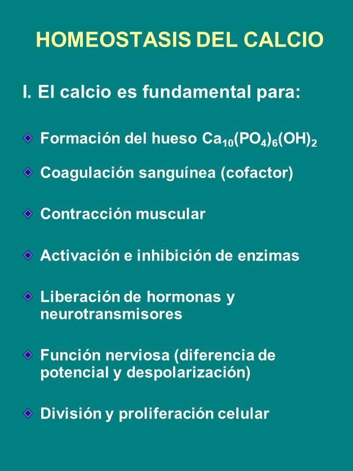 HOMEOSTASIS DEL CALCIO I. El calcio es fundamental para: Formación del hueso Ca 10 (PO 4 ) 6 (OH) 2 Coagulación sanguínea (cofactor) Contracción muscu