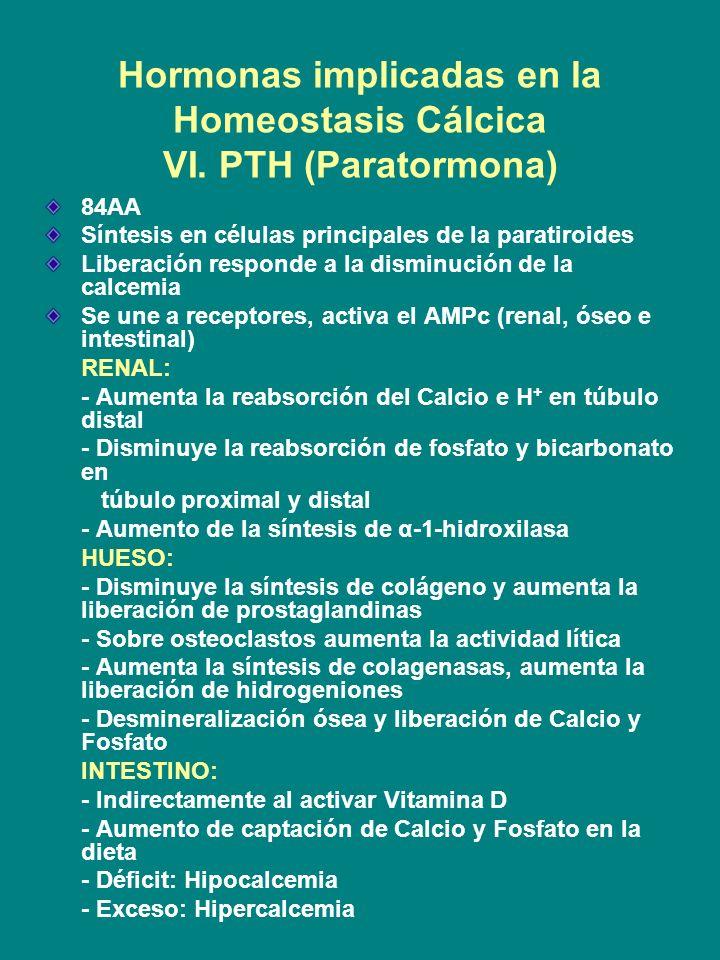 Hormonas implicadas en la Homeostasis Cálcica VI. PTH (Paratormona) 84AA Síntesis en células principales de la paratiroides Liberación responde a la d