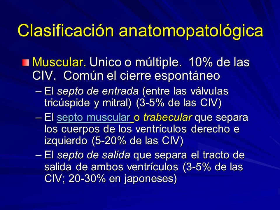 Clasificación anatomopatológica Muscular. Unico o múltiple. 10% de las CIV. Común el cierre espontáneo –El septo de entrada (entre las válvulas tricús