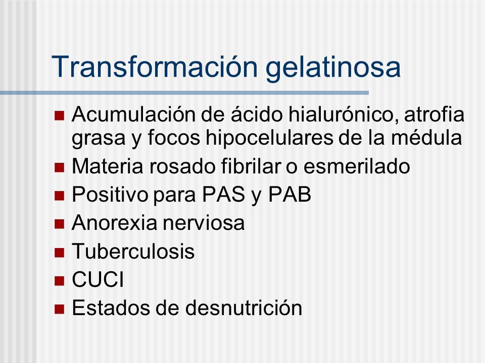 Transformación gelatinosa Acumulación de ácido hialurónico, atrofia grasa y focos hipocelulares de la médula Materia rosado fibrilar o esmerilado Posi