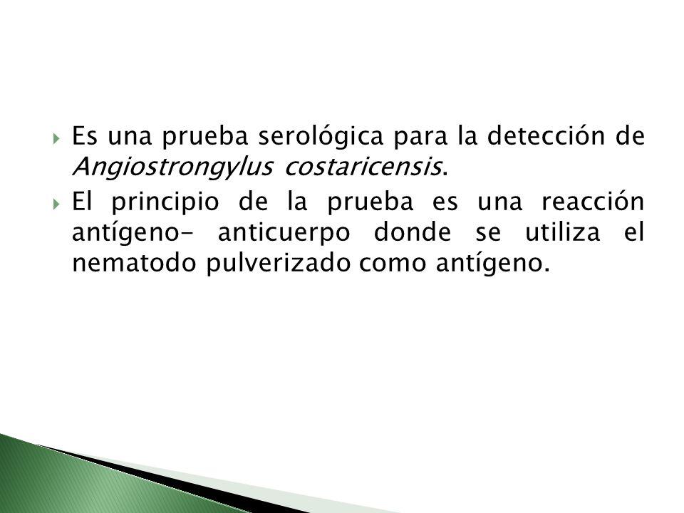 Es una prueba serológica para la detección de Angiostrongylus costaricensis. El principio de la prueba es una reacción antígeno- anticuerpo donde se u