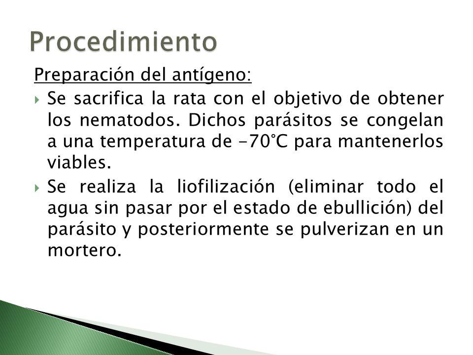 Preparación del antígeno: Se sacrifica la rata con el objetivo de obtener los nematodos. Dichos parásitos se congelan a una temperatura de -70°C para
