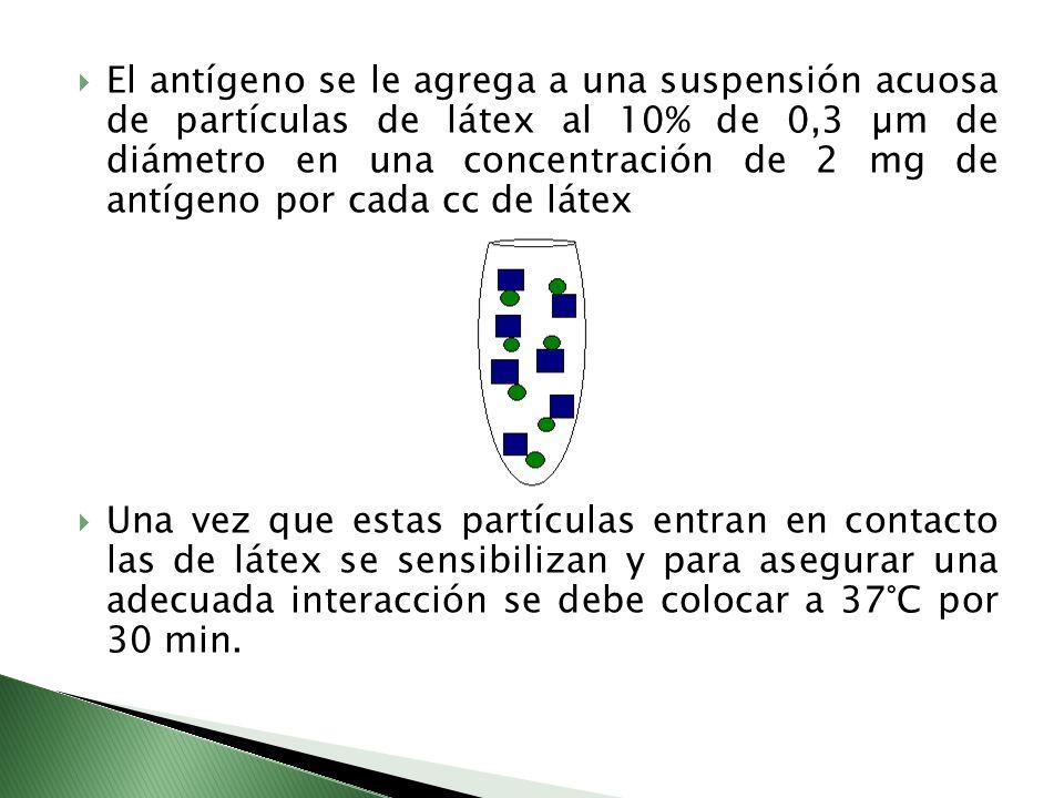 El antígeno se le agrega a una suspensión acuosa de partículas de látex al 10% de 0,3 µm de diámetro en una concentración de 2 mg de antígeno por cada