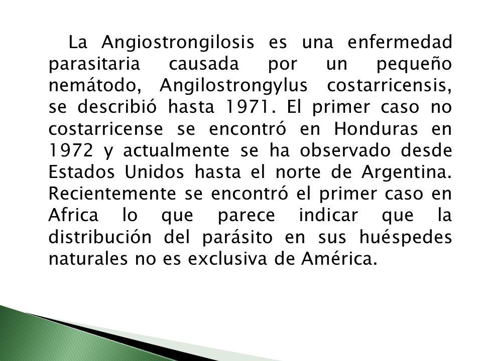 La Angiostrongilosis es una enfermedad parasitaria causada por un pequeño nemátodo, Angilostrongylus costarricensis, se describió hasta 1971. El prime