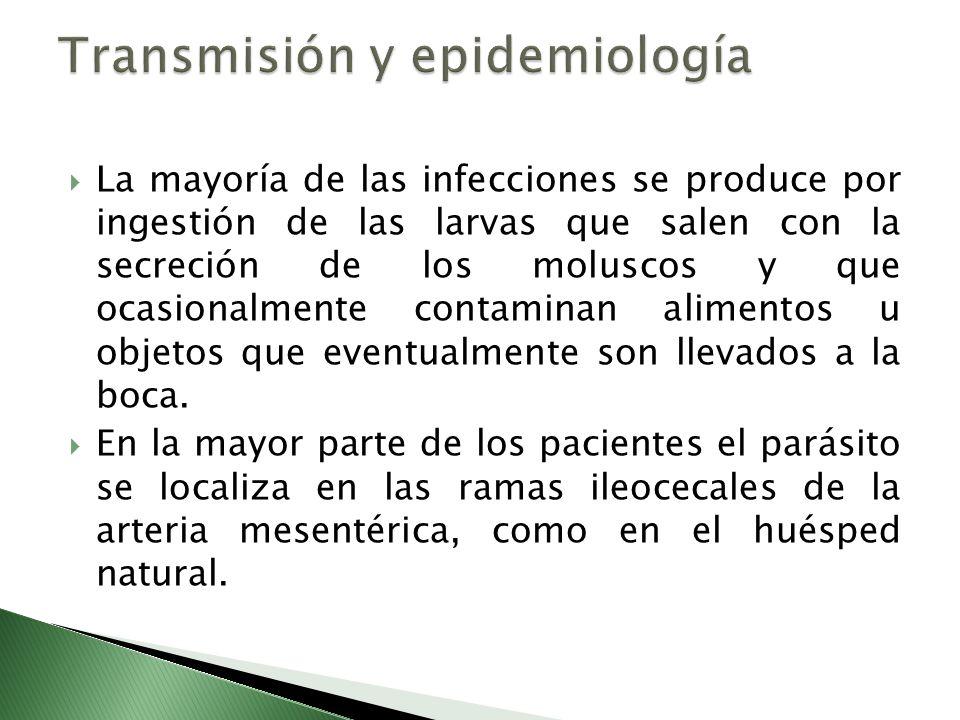 La mayoría de las infecciones se produce por ingestión de las larvas que salen con la secreción de los moluscos y que ocasionalmente contaminan alimen