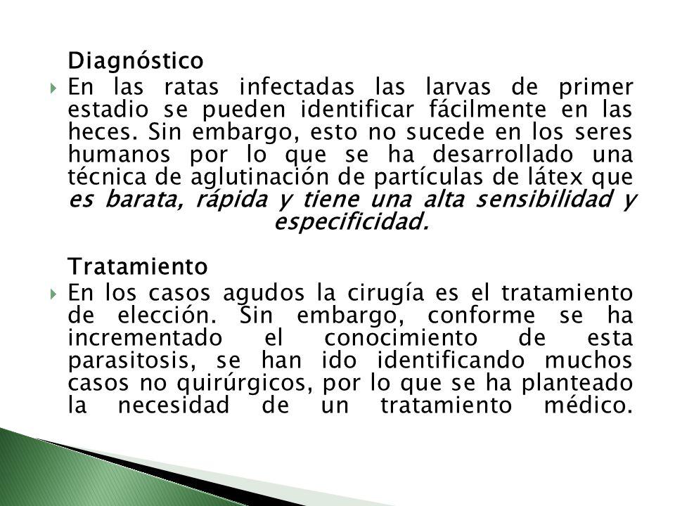 Diagnóstico En las ratas infectadas las larvas de primer estadio se pueden identificar fácilmente en las heces. Sin embargo, esto no sucede en los ser