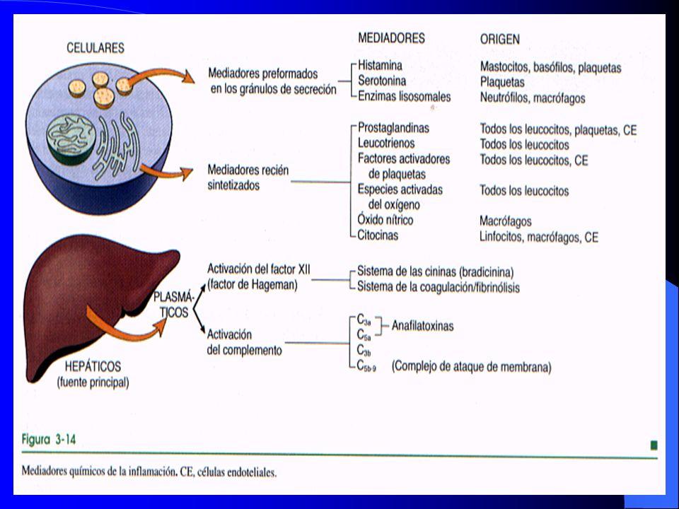Patrones morfológicos de inflamación aguda Úlceras Es un defecto local, o excavación de la superficie de un órgano o tejido producidas por el desprendimiento de tejido necrotico Son ejemplos, las ulceras de las extremidades inferiores de los ancianos con trastornos circulatorios y la úlcera péptica de estomago y duodeno
