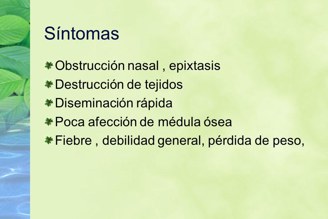 Síntomas Obstrucción nasal, epixtasis Destrucción de tejidos Diseminación rápida Poca afección de médula ósea Fiebre, debilidad general, pérdida de pe