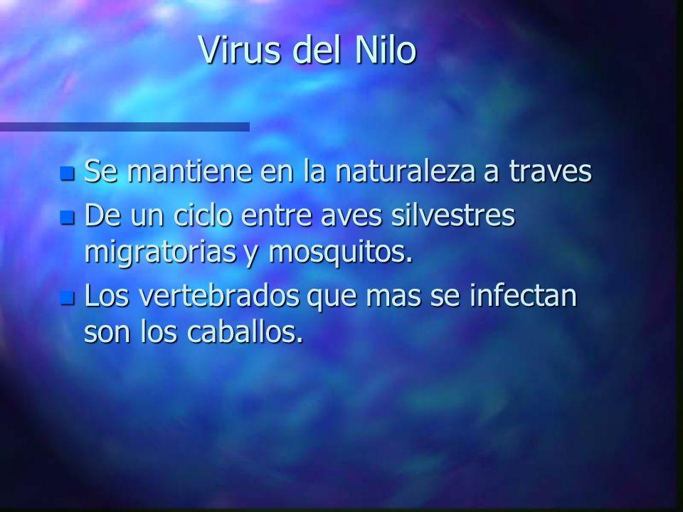 Virus del Nilo n Se mantiene en la naturaleza a traves n De un ciclo entre aves silvestres migratorias y mosquitos. n Los vertebrados que mas se infec