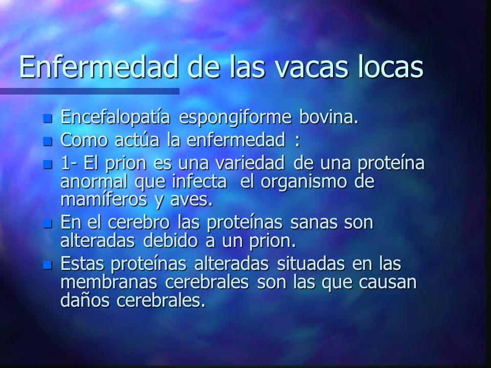 Enfermedad de las vacas locas n Encefalopatía espongiforme bovina. n Como actúa la enfermedad : n 1- El prion es una variedad de una proteína anormal