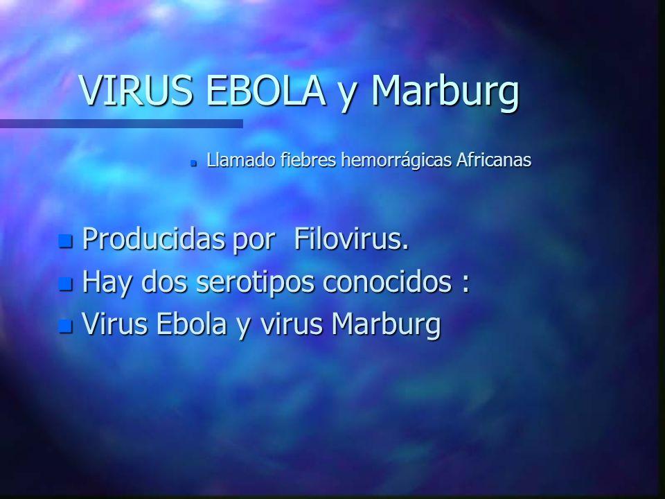 VIRUS EBOLA y Marburg n Llamado fiebres hemorrágicas Africanas n Producidas por Filovirus. n Hay dos serotipos conocidos : n Virus Ebola y virus Marbu