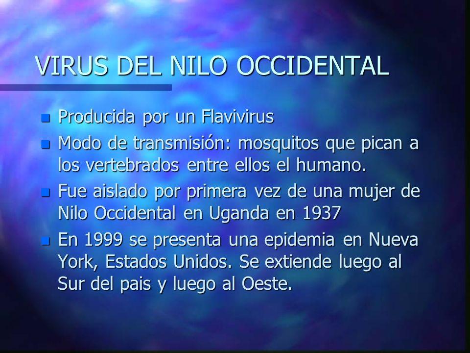 VIRUS DEL NILO OCCIDENTAL n Producida por un Flavivirus n Modo de transmisión: mosquitos que pican a los vertebrados entre ellos el humano. n Fue aisl