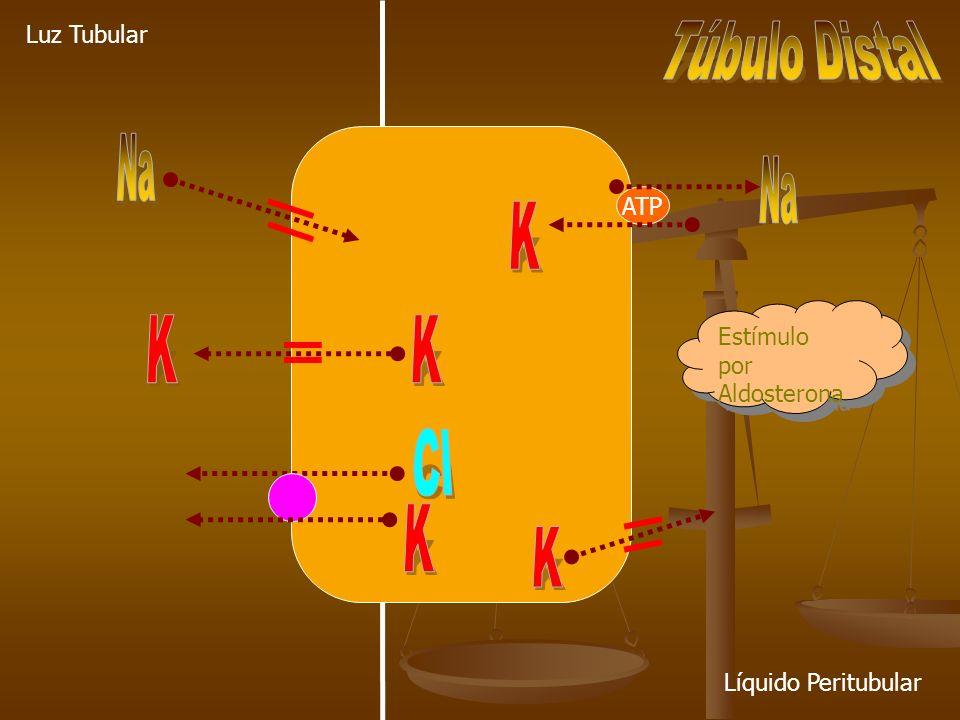 ATP Luz Tubular Líquido Peritubular Estímulo por Aldosterona