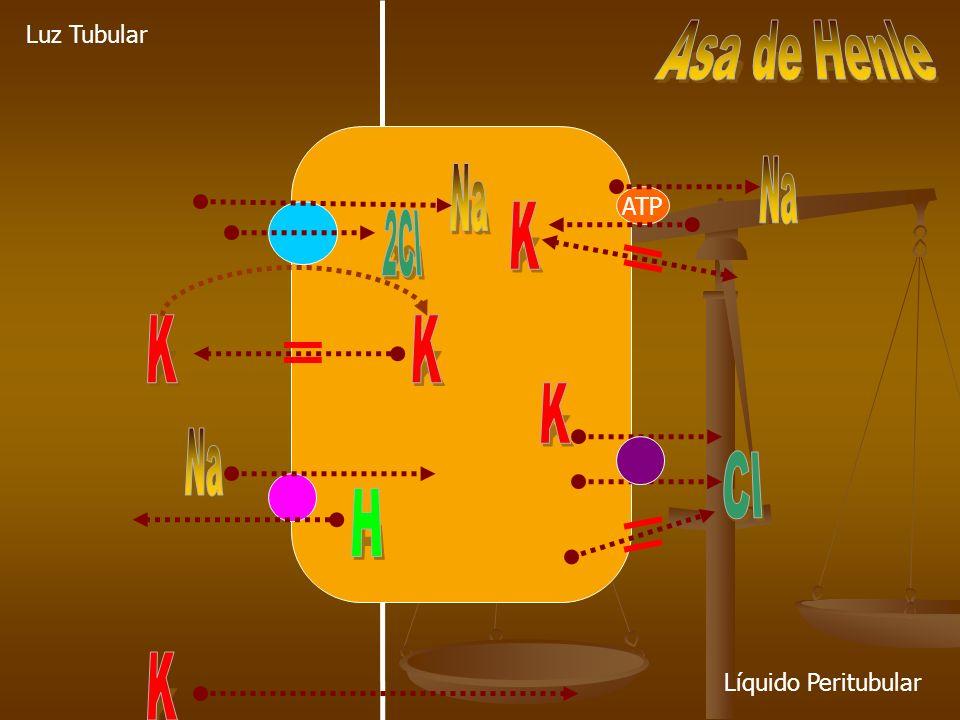 Hipokalemia con K Corporal Normal.Pseudohipokalemia.