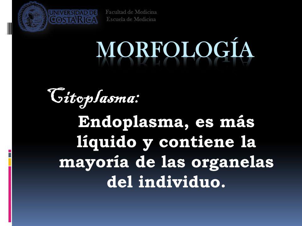 Citoplasma: Endoplasma, es más líquido y contiene la mayoría de las organelas del individuo. Facultad de Medicina Escuela de Medicina