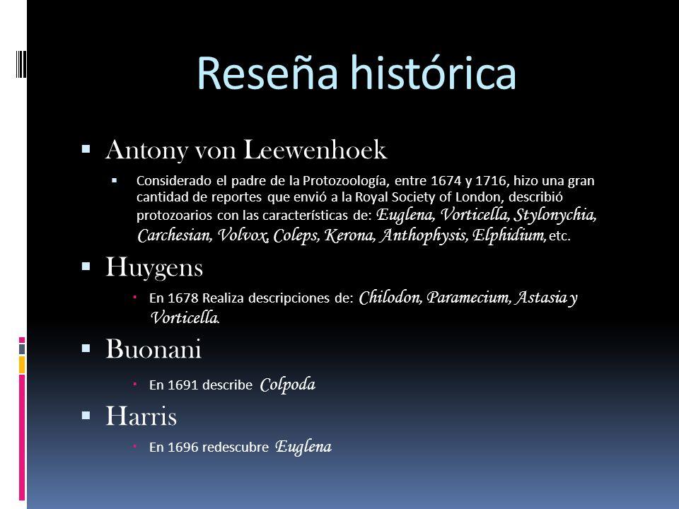 Reseña histórica Antony von Leewenhoek Considerado el padre de la Protozoología, entre 1674 y 1716, hizo una gran cantidad de reportes que envió a la