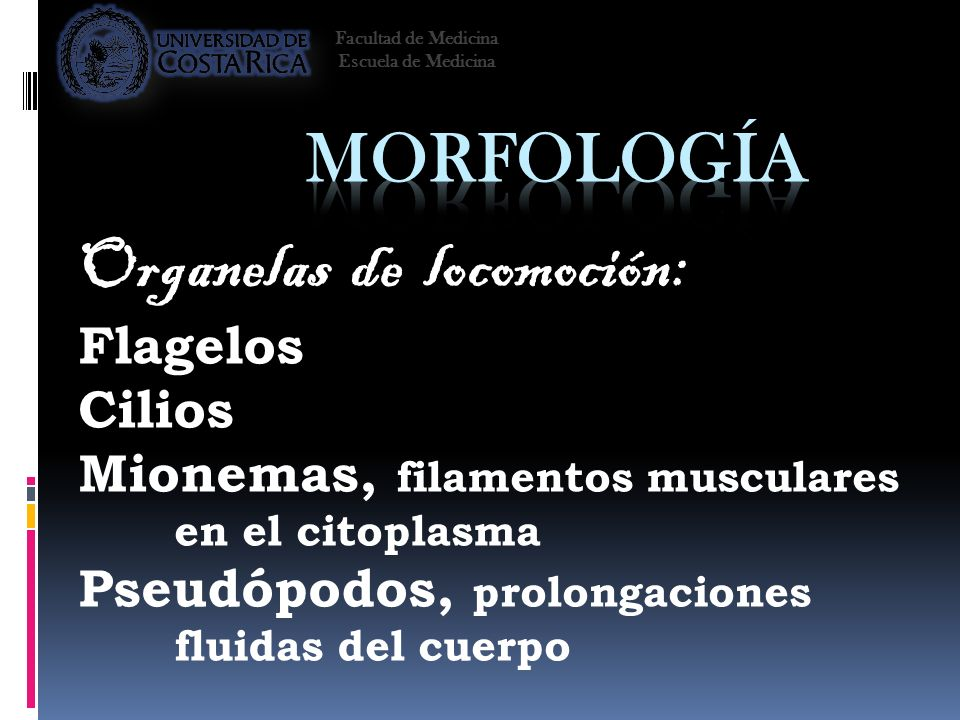 Organelas de locomoción: Flagelos Cilios Mionemas, filamentos musculares en el citoplasma Pseudópodos, prolongaciones fluidas del cuerpo Facultad de M