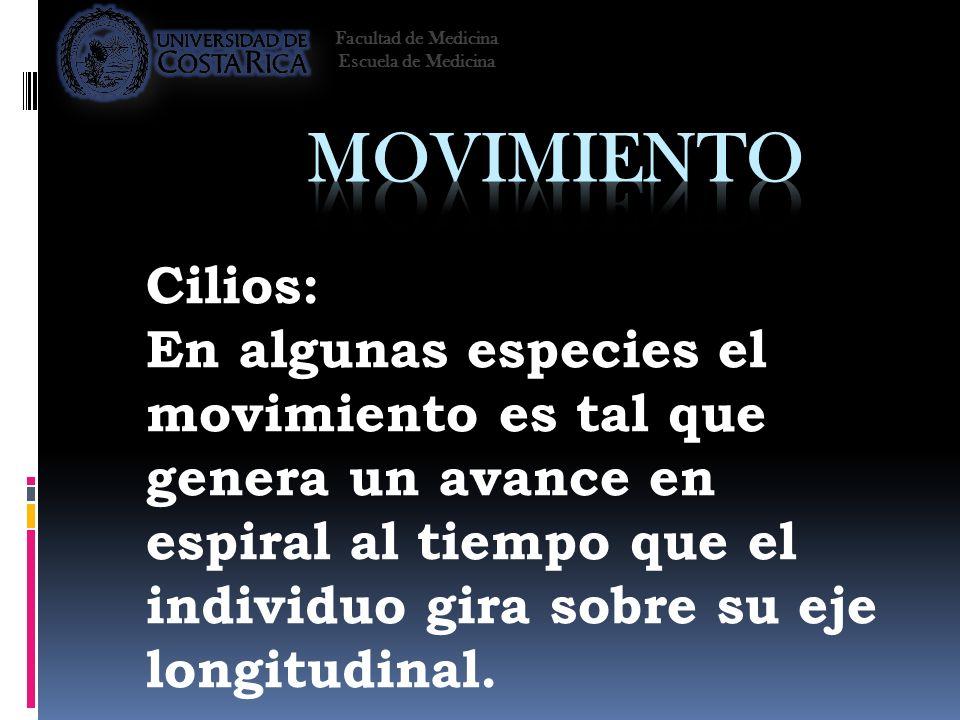 Cilios: En algunas especies el movimiento es tal que genera un avance en espiral al tiempo que el individuo gira sobre su eje longitudinal. Facultad d