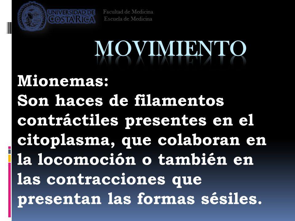 Mionemas: Son haces de filamentos contráctiles presentes en el citoplasma, que colaboran en la locomoción o también en las contracciones que presentan