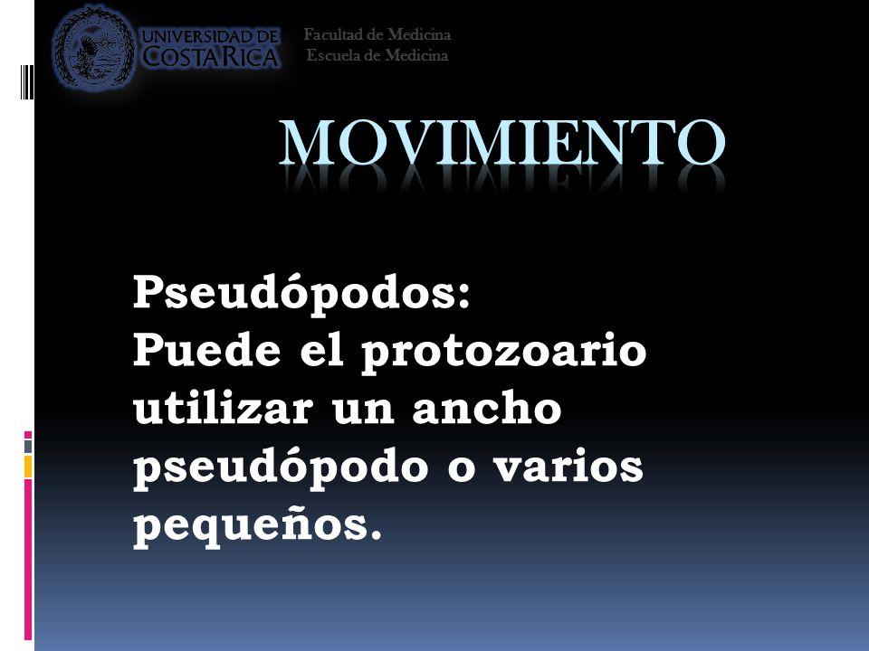 Pseudópodos: Puede el protozoario utilizar un ancho pseudópodo o varios pequeños. Facultad de Medicina Escuela de Medicina