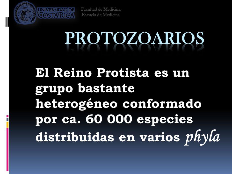 El Reino Protista es un grupo bastante heterogéneo conformado por ca. 60 000 especies distribuidas en varios phyla Facultad de Medicina Escuela de Med