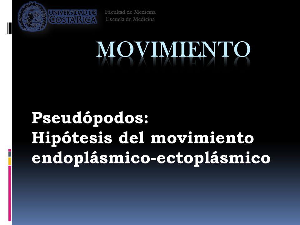 Pseudópodos: Hipótesis del movimiento endoplásmico-ectoplásmico Facultad de Medicina Escuela de Medicina