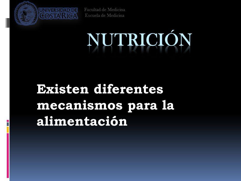 Existen diferentes mecanismos para la alimentación Facultad de Medicina Escuela de Medicina
