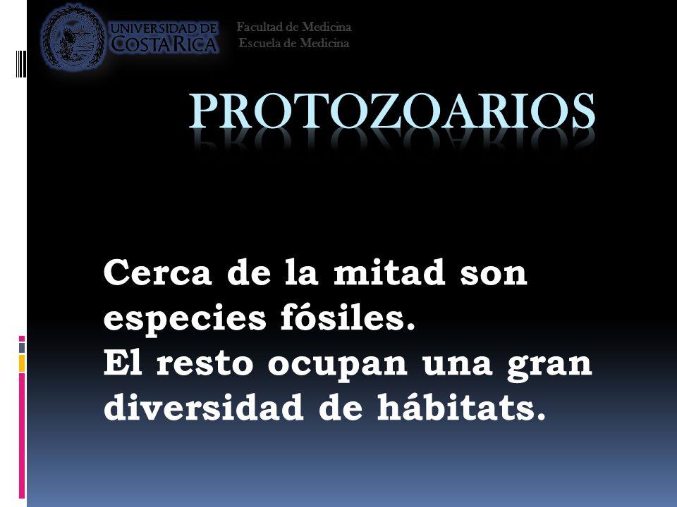 Cerca de la mitad son especies fósiles. El resto ocupan una gran diversidad de hábitats. Facultad de Medicina Escuela de Medicina