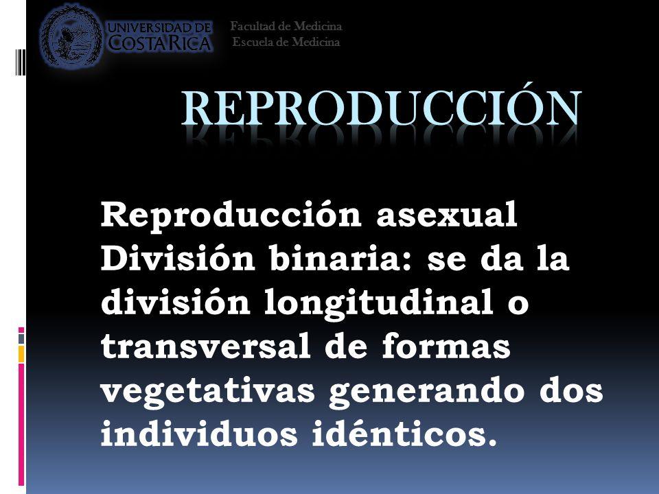 Reproducción asexual División binaria: se da la división longitudinal o transversal de formas vegetativas generando dos individuos idénticos. Facultad