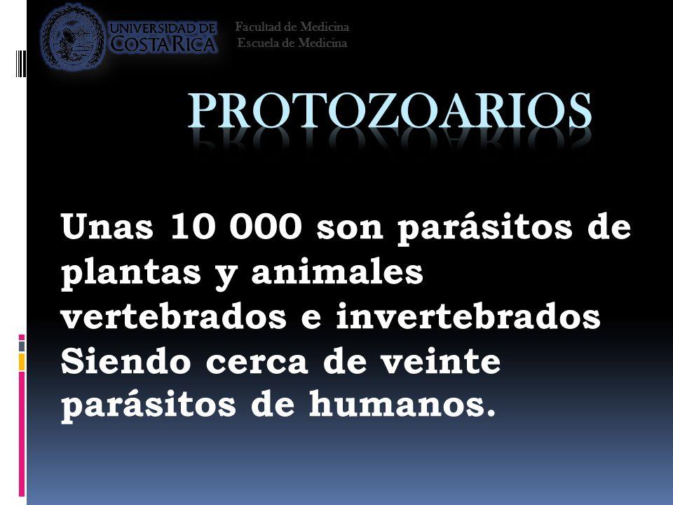 Unas 10 000 son parásitos de plantas y animales vertebrados e invertebrados Siendo cerca de veinte parásitos de humanos. Facultad de Medicina Escuela