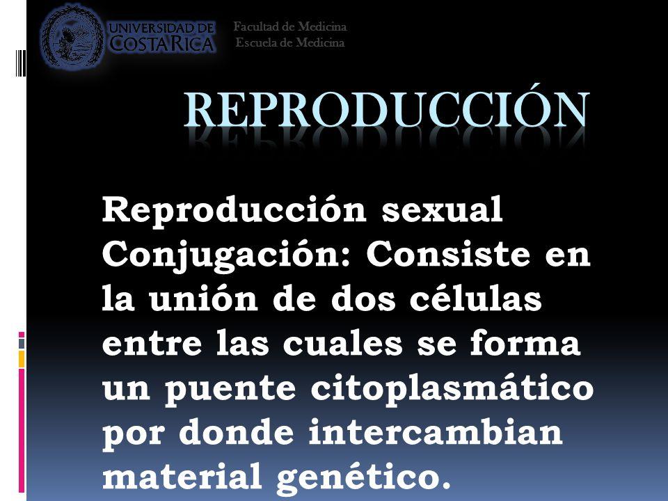 Reproducción sexual Conjugación: Consiste en la unión de dos células entre las cuales se forma un puente citoplasmático por donde intercambian materia