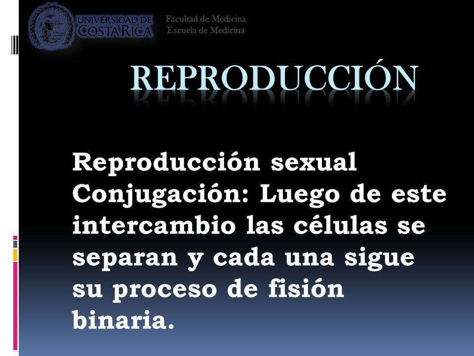 Reproducción sexual Conjugación: Luego de este intercambio las células se separan y cada una sigue su proceso de fisión binaria. Facultad de Medicina