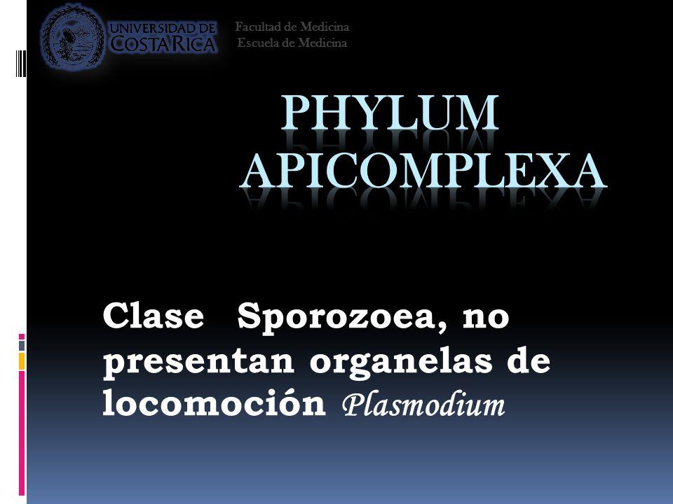 ClaseSporozoea, no presentan organelas de locomoción Plasmodium Facultad de Medicina Escuela de Medicina