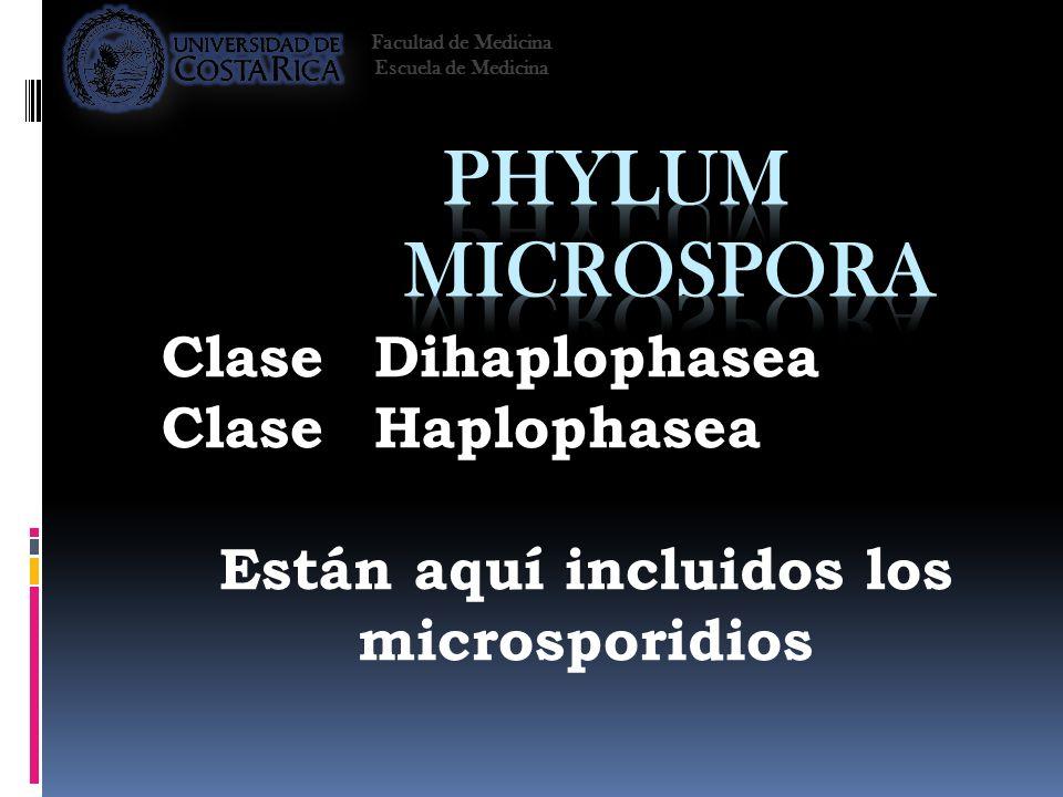ClaseDihaplophasea ClaseHaplophasea Están aquí incluidos los microsporidios Facultad de Medicina Escuela de Medicina